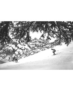 Cedars, Skiing Slope Among The Cedars 1946