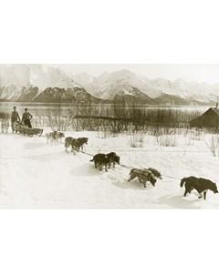 Vintage Picture Of Dogslead Team(alaska Maybe)