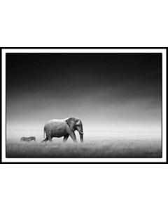 Zebra And Elephant Walking Together