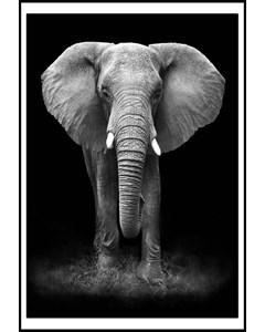 Elephant With Big Ears
