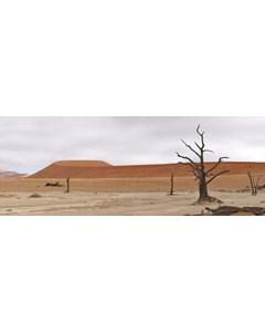 Öken Med Döda Träd