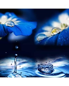 Vattendroppar Och Blommor