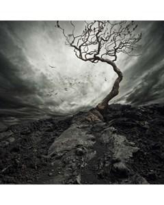 Krokigt Träd Och Fåglar