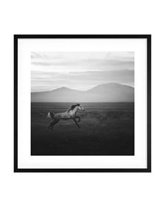Poster Wild Horse